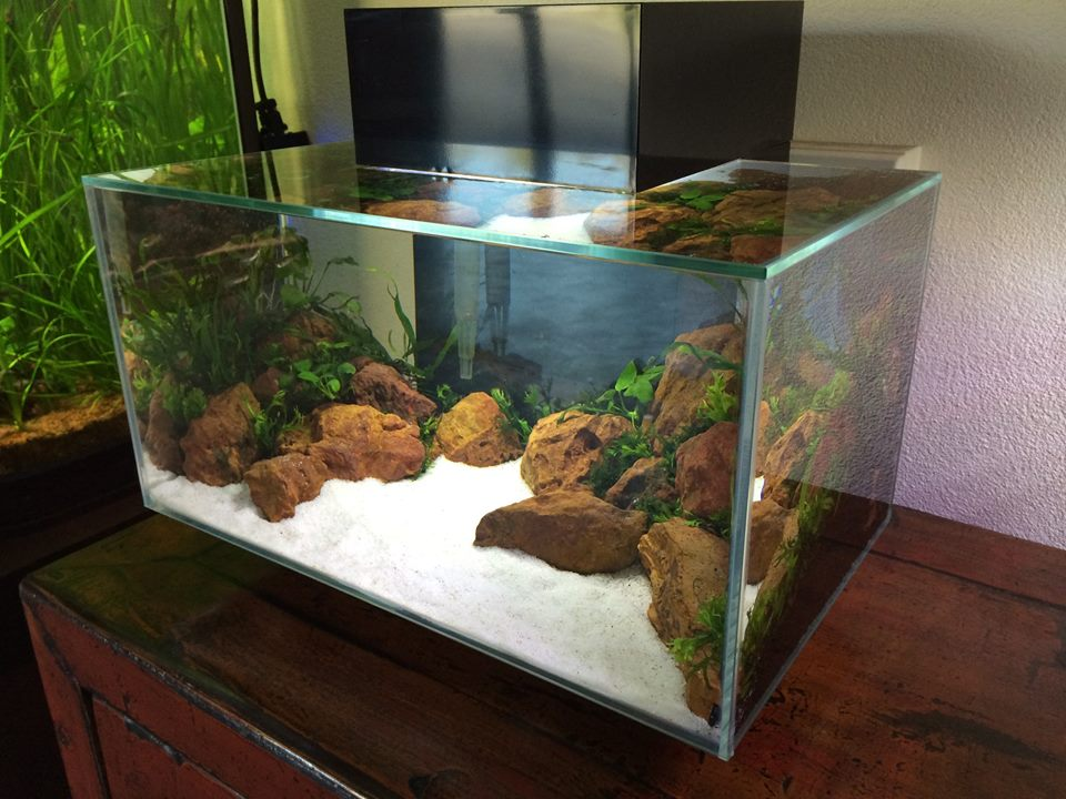 Fluval Aquascape Plants - Aquascape Ideas
