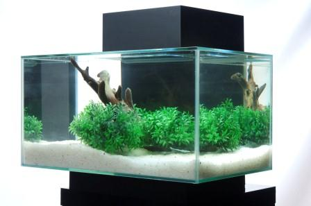 The aquatic plant society a planted fluval edge for Fluval edge fish tank