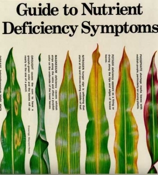 Diagnosing Plant Deficiencies