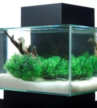 A Planted Fluval EDGE