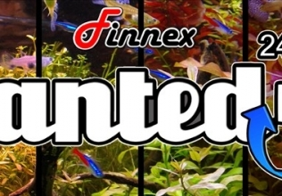 The Finnex Planted+ 24/7 In Action [Updated]