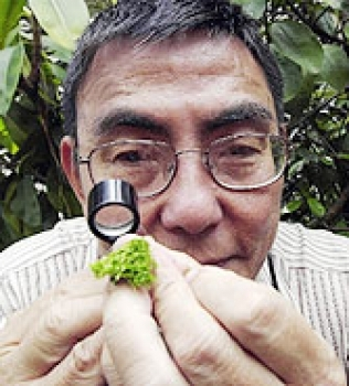 Benito Tan, The Moss Guy