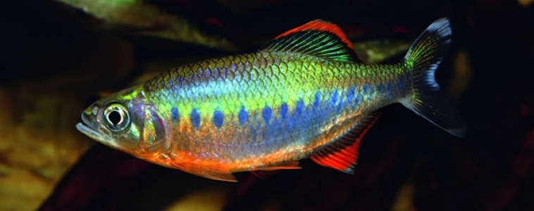 Fish that look great in photos but…